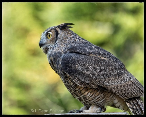 Owl Relax