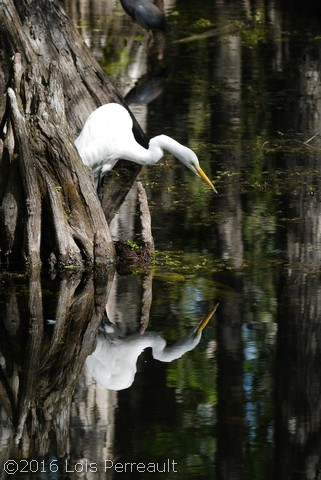 I see you! Everglades, Florida