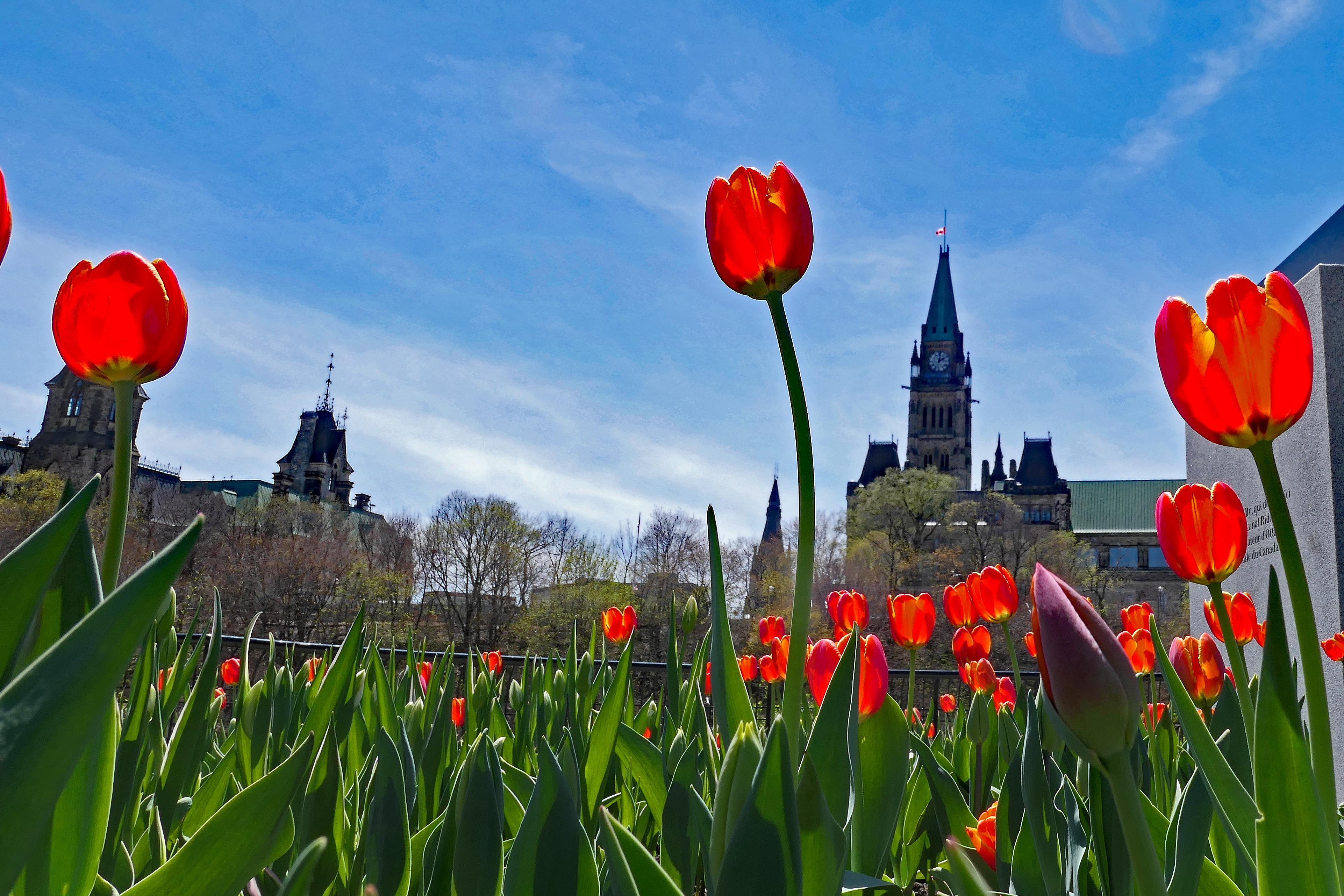2018 Ottawa Tulip Festival